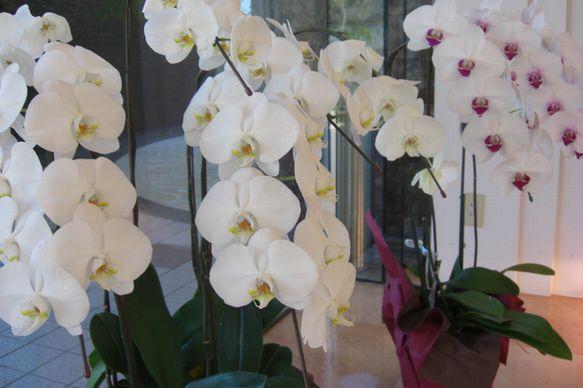 蘭の花S.jpg